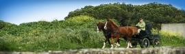 horse-drawn-carriage-web-header