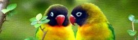 beautiful-colorful-craquelure-bird-website-header