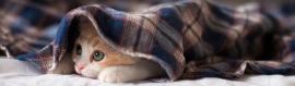 lovely-sleeping-kitten-blog-header