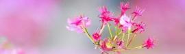 cool-creative-pink-flowers-website-header