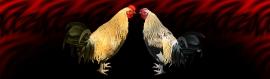 talking-hens-funny-header